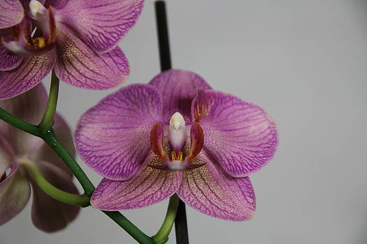 Orchid10 by George Christoff