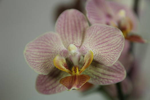 Orchid6 by George Christoff