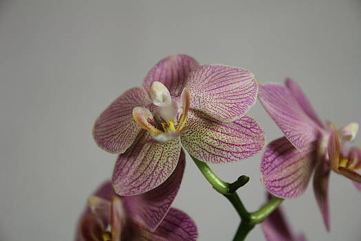Orchid8 by George Christoff