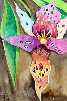 Patricia Lazaro - Orchidaseae