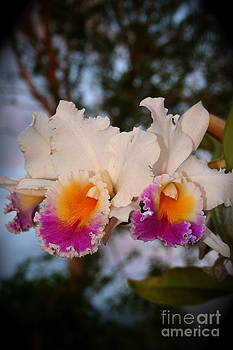 Orchid Elsie Sloan by The Art of Alice Terrill