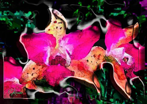 Orchids by Edwin Rosado