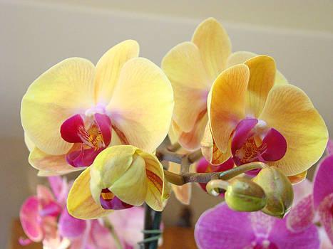 Baslee Troutman - Orchids Floral Fine Art Prints Flowers