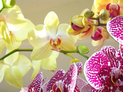 Baslee Troutman - Orchids Flowers art Prints Floral Bouquet