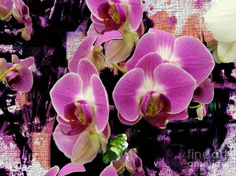 Scott B Bennett - Orchids in abstract