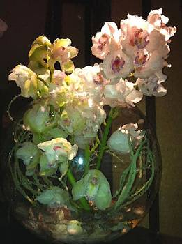 Orchids in the spotlight by Lyn Pacific