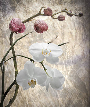 Orchids by Matthew Bruce