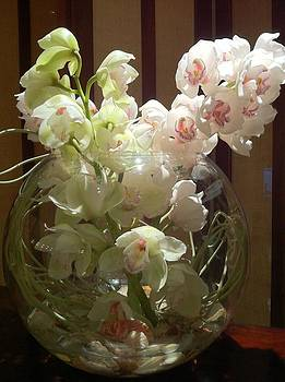 Orchids on show by Lyn Pacific