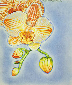 Orchids by Taryn  Libby