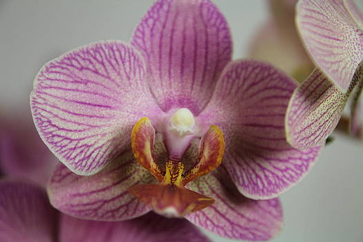 Orchids1 by George Christoff