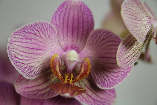 Orchids2 by George Christoff