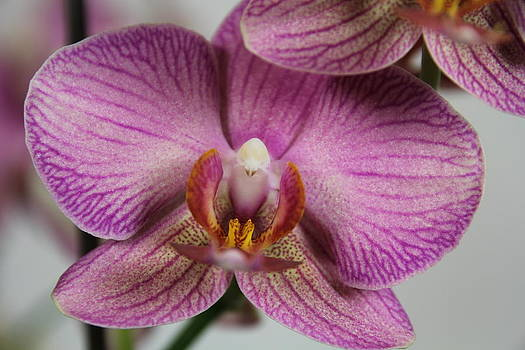 Orchids3 by George Christoff