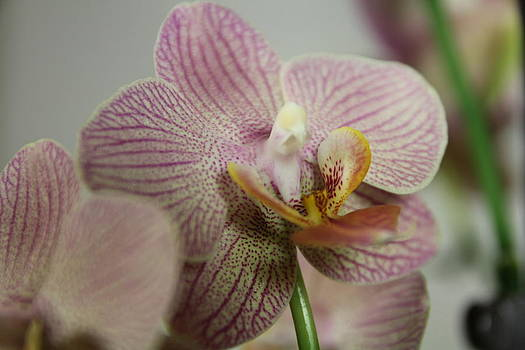 Orchids5 by George Christoff