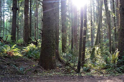 Oregon coastal forest by Linda Larson