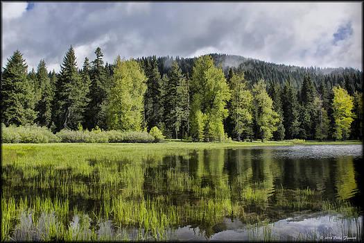 Erika Fawcett - Oregon Lake