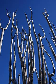 Organ Pipe Skeleton 2 by T C Brown