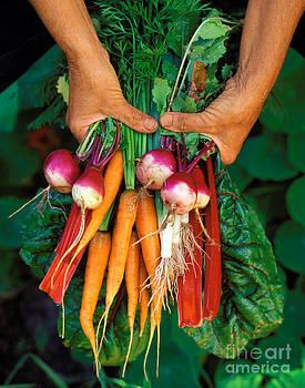 Craig Lovell - Organic Farmers Veggies