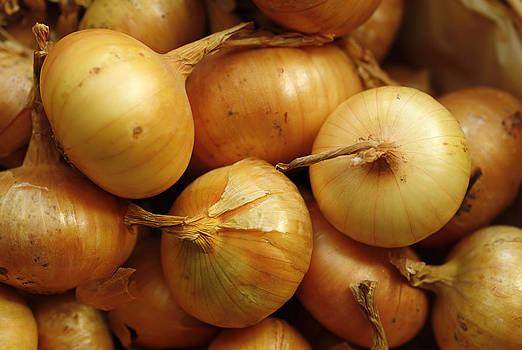 Organic Onions by Sergei Zinovjev
