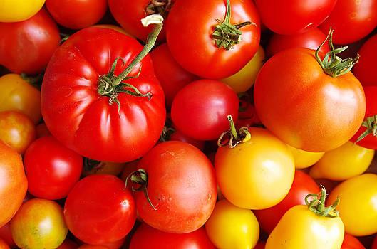 Organic Tomatoes by Sergei Zinovjev