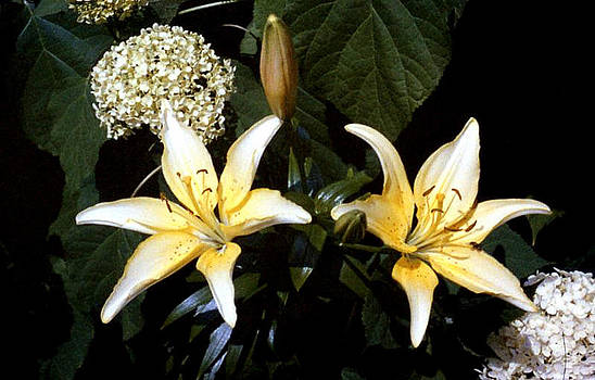 Stephen Proper Gredler - Oriental Lily