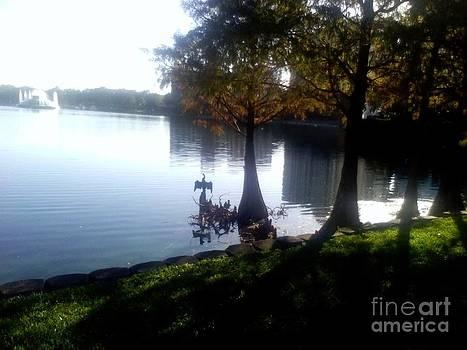 Orlando Florida  131 by Vale Tek