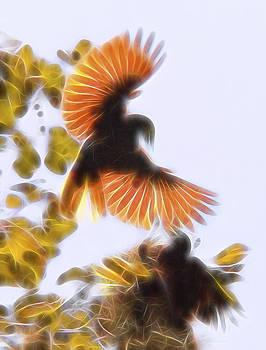 Oropendula Courtship Dance by William Horden