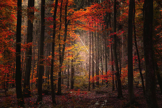 Orton Forest by Philippe Sainte-Laudy