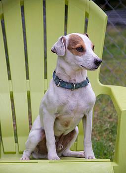 Oscar's Chair by Soccer Dog Design