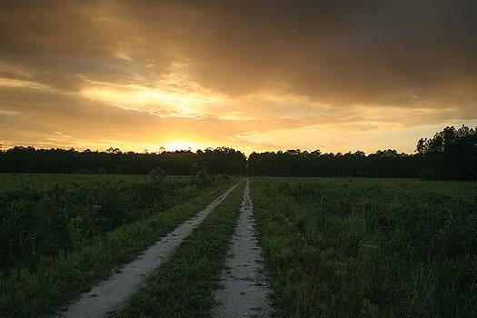Osceola Forest Sunset by Bob Richter