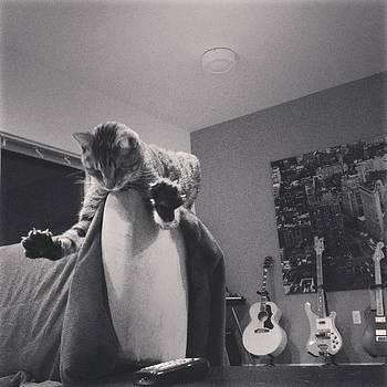 Oskar Super Cat by Mick Szydlowski