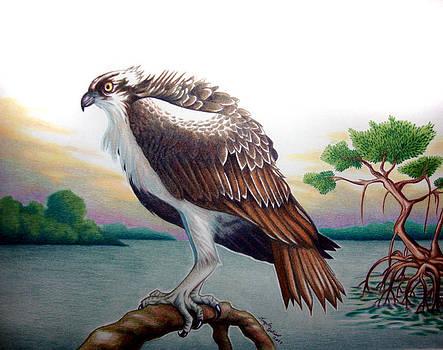 Osprey At Dusk by Angela DeRiso