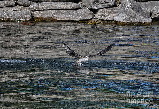 Osprey Crossing by Skye Ryan-Evans