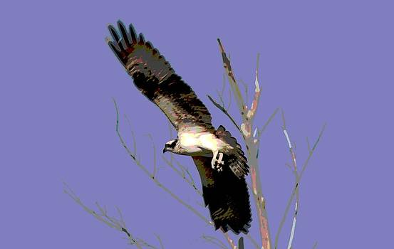 Osprey Lift Off by Sharon McLain