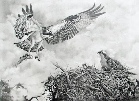 Osprey Lovers Key Florida by Richard Devine
