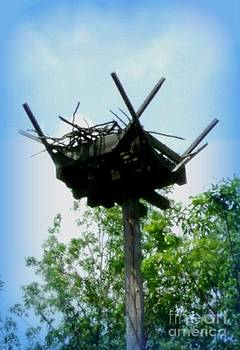 Gail Matthews - Osprey Nest