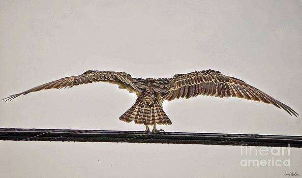 Osprey Rain Ritual by Skye Ryan-Evans