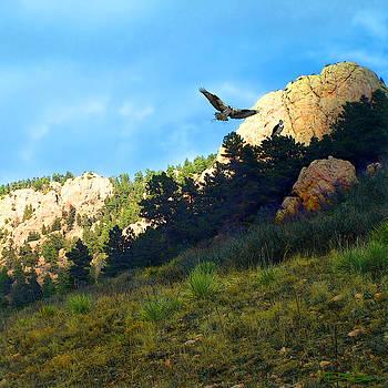 Osprey by Ric Soulen