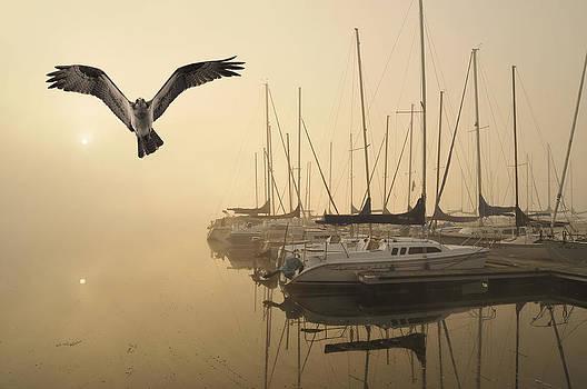 Randall Branham - Osprey sailing club Sunrise