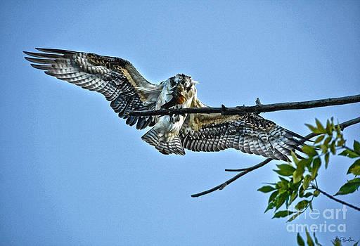 Osprey Takeaway by Skye Ryan-Evans