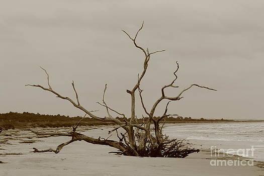Ossabaw Island Bone Yard by Andre Turner
