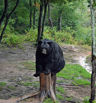 Oswald's Bear by Kurt Bonnell