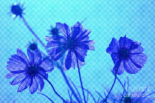 Beverly Claire Kaiya - Otherworldly Cosmos Flowers in Aqua and Purple