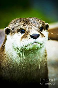 Otter 2 by Alan Oliver
