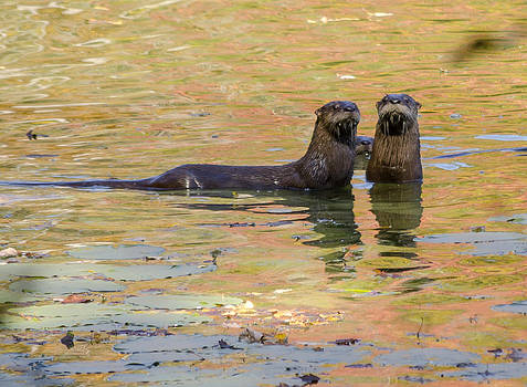 Otter Family by Paul Geilfuss