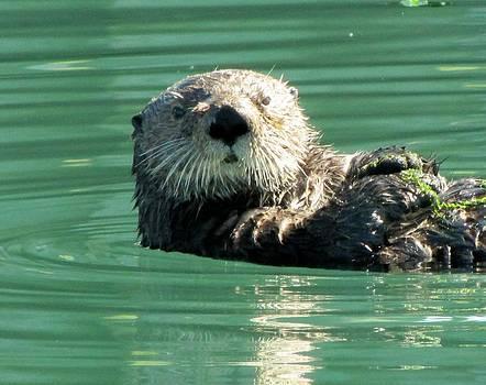 Lisa Dunn - otter in Cordova Harbor
