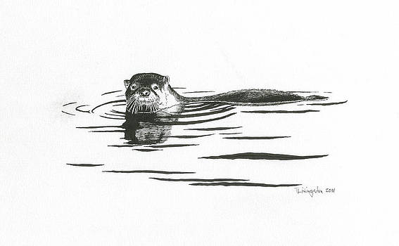 Timothy Livingston - Otter In The Water