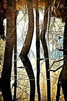 Marty Koch - Otter Slough Reflections