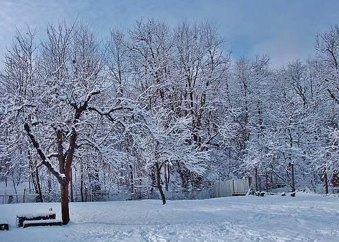 Our Winter Wonderland by Alison Richardson-Douglas