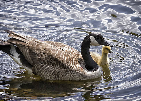 Out For A Swim by Linda Tiepelman