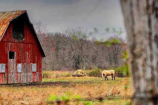 Off The Beaten Path Photography - Andrew Alexander - Out In The Country